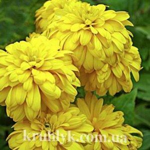 watermarked - RUDBECKIa laciniata 'Goldquelle'